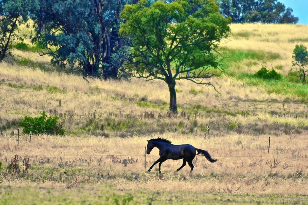 Canberra Equestrian Centre